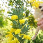 一年中お花が咲き誇る!大神(おおが)ファームで愛犬とお散歩やドッグランで遊ぼう!<大分県>