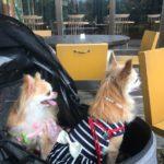 【2021年版】春から夏に行きたい!福岡県の犬同伴OKのレストラン&ドッグカフェ6選