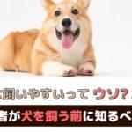 小型犬は飼いやすいってホント?初めて犬を飼う前に知るべきこと【動物看護師が解説】