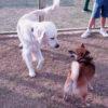 「犬は吠えて当然」ではないと気づいて!わんちゃんにとって「吠える」こととは。