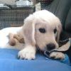 愛犬が「いい子」にできない、そのワケは?愛犬の基本的欲求を満たしてあげよう!