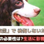 「犬の抜歯で後悔しないために」抜歯の必要性は?生活に影響はあるの?【動物看護師が解説】