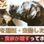 愛犬の避妊・去勢手術後、「太る」「食欲が増える」ってホントなの?【動物看護師が解説】