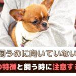 犬を飼うのに向いていない人の7つの特徴~飼う時に注意したいこともご紹介~【動物看護師が解説】