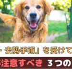 避妊・去勢手術を受けていない犬がかかりやすい病気と注意すること!【動物看護師が解説】