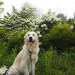 「飼いたい犬」と「飼える犬」は違う!? 自分に合ったタイプの愛犬と巡り会うには。