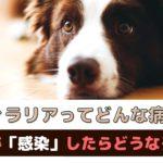 フィラリアってどんな病気?犬が感染したらどうなるの?【動物看護師が解説】