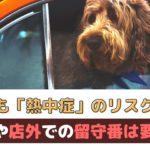 春でも熱中症のリスクあり!車内や外で犬を待たせるのは要注意【動物看護師が解説】