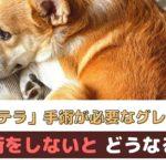 犬のパテラ(膝蓋骨脱臼)はどんな病気?手術が必要なグレードは?【動物看護師が解説】