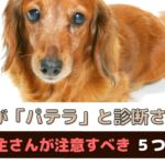 愛犬がパテラ(膝蓋骨脱臼)と診断されたら!飼い主さんが注意することは?【動物看護師が解説】
