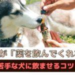 「愛犬が薬を飲まない」薬が苦手な犬に上手に飲ませるコツと工夫【動物看護師が解説】