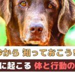 今から知っておこう!老犬になると現れる「体と心と行動の変化」【動物看護師が解説】