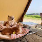 犬連れキャンパー厳選!ペットと一緒に楽しめるキャンプ場10選(九州編)