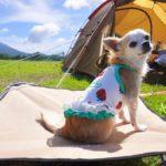 愛犬と初めてのキャンプ!楽しく過ごすために気を付けるべき7つのこと