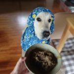 便利な調理道具とネット通販に頼ろう!愛犬の手作りごはんの「時短テク」