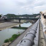【大分県日田市】江戸情緒の残る豆田町を愛犬と一緒に散策&食べ歩き