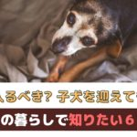 シニア犬との暮らしで知っておきたい6つのこと~ペット保険や新住犬について~【動物看護師が解説】