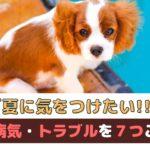 「夏に気をつけたい」犬の病気・トラブルを7つご紹介【動物看護師が解説】