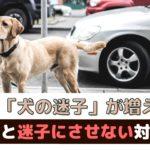 「夏は犬の迷子が増える?!」迷子の原因と対策は?【動物看護師が解説】