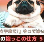 「今すぐ止めて!」やってはいけない犬の抱っこの仕方【動物看護師が解説】