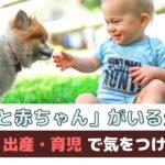 「犬と赤ちゃんがいる生活」妊娠・出産・育児で気をつけること【動物看護師が解説】