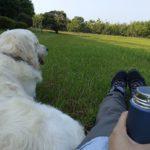 運動もお出かけも大切だけど・・・愛犬とゆったり過ごす時間がもたらす良い影響とは?