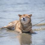 犬と海で泳いだ後のお手入れどうしてる?海水は現地でしっかり流して帰ろう!