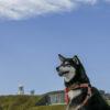 夏に行きたい!愛犬と一緒に楽しめる九州の絶景スポット&レジャー6選