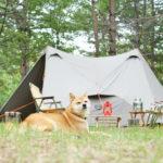 愛犬と一緒にキャンプを楽しもう!夏の暑さ対策に使えるプチプラグッズ