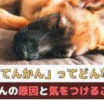 犬の「てんかん発作」ってどんな病気?原因と飼い主さんが気をつけることは?【動物看護師が解説】