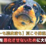 【犬のアトピー・膿皮症予防にも】夏こそ保湿が重要!皮膚病を悪化させないために大事なこと【動物看護師が解説】