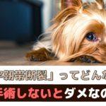 犬の前十字靭帯断裂ってどんな病気?手術しないとダメなの?【動物看護師が解説】