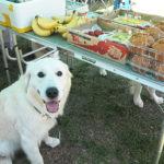 暮らしの中のルールを教えて、愛犬の自制心を養おう!