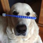なかなか続けられない、愛犬の歯みがき。ずぼら飼い主の私が編み出した、気楽に続けるコツとは!?