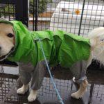 愛犬は本当に雨が嫌い?「雨だからお散歩に行かない」のは誰のためか考えてみよう