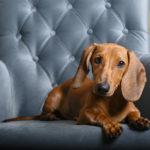 犬と一緒にラグジュアリーステイを楽しもう!ドッグフレンドリープランのある高級ホテル<関東編>