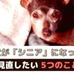 愛犬がシニアになったら見直したい5つのこと【動物看護師が解説】