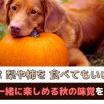 「犬は梨や柿を食べてもいいの?」愛犬と一緒に楽しめる秋の味覚をご紹介【動物看護師が解説】