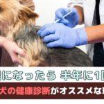 「5歳になったら半年に1回?!」秋こそ犬の健康診断がオススメな理由は?【動物看護師が解説】