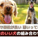 犬同士で相性が良い・悪いってあるの?相性がいい犬の組み合わせは?【動物看護師が解説】