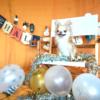 100円ショップのハロウィングッズで飾り付け!愛犬用フォトスペースを作ろう!