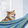 愛犬と一緒に楽しめる!ペットのための施設が充実しているおすすめリゾートホテルをご紹介