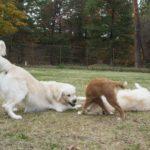 愛犬に「犬友だち」は必要?他のわんちゃんとの触れ合いで得られるものとは。