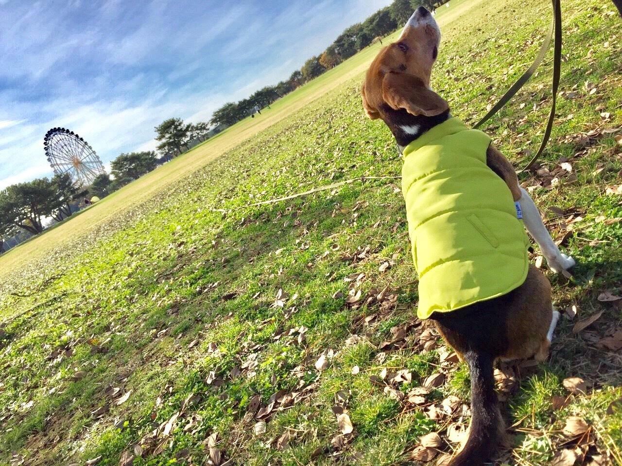 広々とした芝生が良い!
