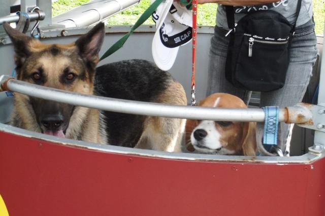 大型犬もリフトに乗れる優しいサービス♪