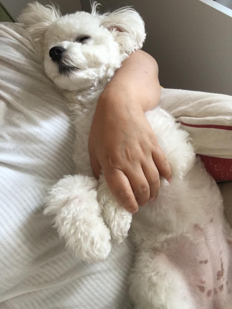 """第37回フォトコンテスト """"最高にかわいい愛犬の寝顔""""(応募数 620枚)二度寝"""